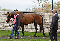 LEXINGTON, KY - April 14, 2018.  #8 Lady Aurelia and trainer Wesley Ward in the paddock before running 2nd in the Giant's Causeway (Listed) $100,000 at Keeneland Race Course.  Lexington, Kentucky. (Photo by Candice Chavez/Eclipse Sportswire/Getty Images)