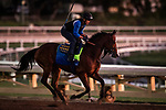 OCT 24: Anuket gallops at Santa Anita Park in Arcadia, California on Oct 24, 2019. Evers/Eclipse Sportswire/Breeders' Cup