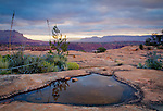 Arizona, Grand Canyon National Park, Toroweap. Rain water pools in the desert sandstone with the Grand Canyon distant at dawn.