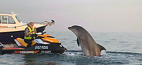 Close encounter - Grandmother gasps in delight as a friendly dolphin jumps out of the water.