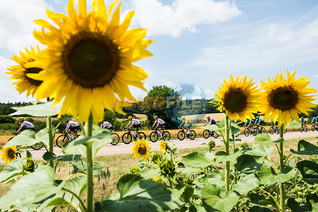 The peloton including race leader Christopher Froome (GBR) Team Sky pass sunflower fields during Stage 7 of the 104th edition of the Tour de France 2017, running 213.5km from Troyes to Nuits-Saint-Georges, France. 7th July 2017.<br /> Picture: ASO/Alex Broadway | Cyclefile<br /> <br /> <br /> All photos usage must carry mandatory copyright credit (&copy; Cyclefile | ASO/Alex Broadway)