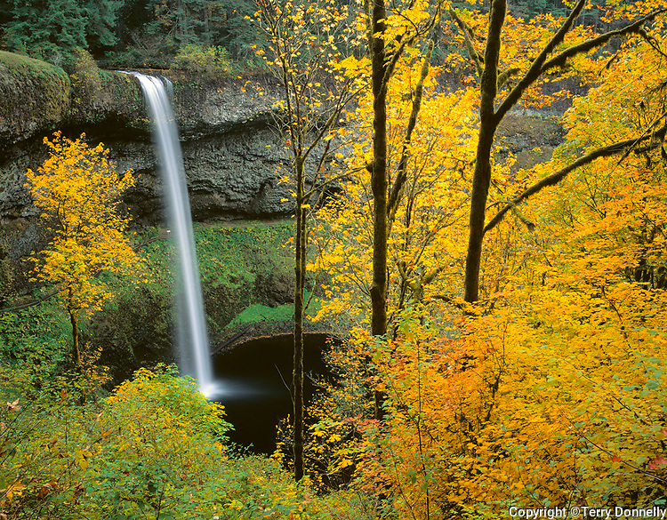 Silver Falls State Park, OR<br /> South Falls plunges 177 ft over basalt cliff into <br /> Silver Creek Canyon framed with Big Leaf Maples in fall color