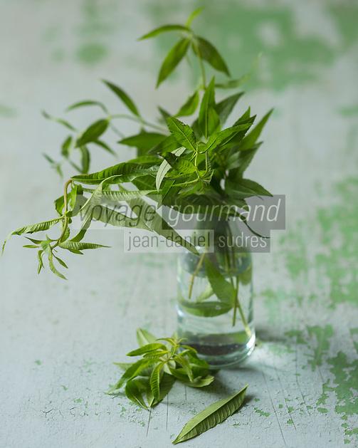 Verveine fraiche bio  /  Organic fresh  vervain - Stylisme : Valérie LHOMME