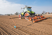 Drilling sugar beet - Lincolnshire, March