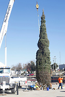NWA Arkansas Democrat-Gazette/DAVID GOTTSCHALK Personnel with Multi-Craft Contractors, Inc. position a 40 foot Norway Spruce Christmas Tree Thursday, November 15, 2018, on Shiloh Square in downtown Springdale. The tree, transported by Tyson Foods, will be illuminated November 24 as part of the Christmas on the Creek 2018 event facilitated by the Downtown Springdale Alliance.