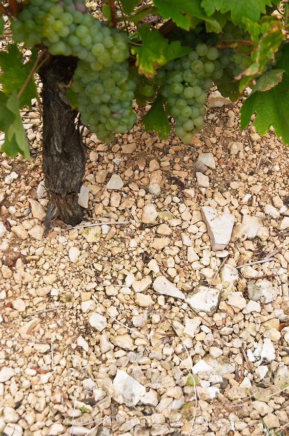 Soil detail. Stony. Calcareous. Domaine de la Perriere, Sancerre, Loire, France