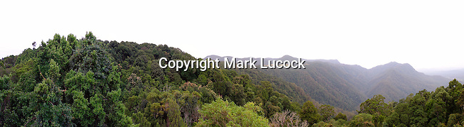 Dorrigo National Park, NSW