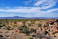 The Colorado Desert in Joshua Tree National Park, California.