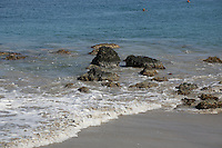 Korallenriff am Strand L'Anse Mitan bei Fort-de-France auf Martinique