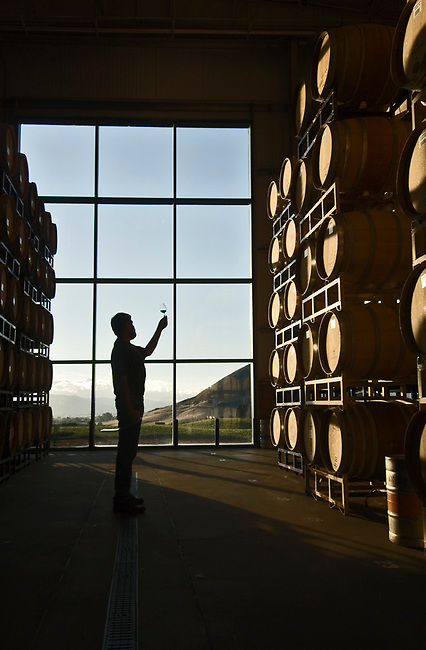 Cellar manager inspects wine glass at Baileyana Winery near San Luis Obispo.