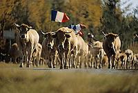 Europe/France/Auvergne/12/Aveyron: Aubrac - Départ du troupeau pour la transhumance vers la vallée