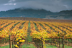Sonoma County Wine Region, CA