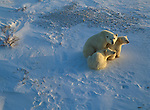 Polar bear and two cubs sit together in the snow.