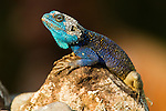 Reptiles, Amphibians & more