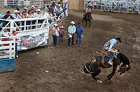Stephen Brashear.Potential buyers watch a saddle bronc buck during the Miles City Bucking Horse Sale at the Eastern Montana Fairgrounds in Miles City Montana Sat., May 19, 2007. Saddle broncs and bareback broncs are auctioned off after they are bucked.