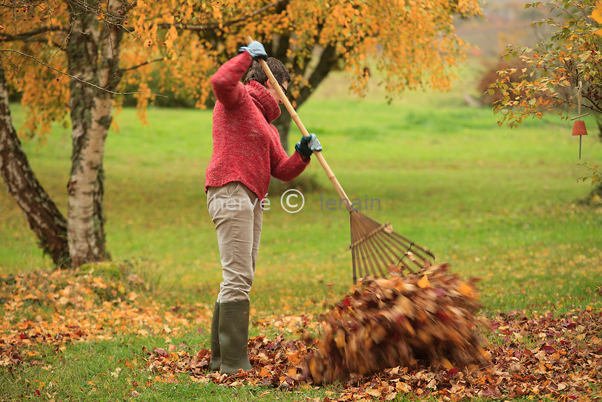 ramassage des feuilles en automne au rateau à feuilles (model and property release OK)// raking leaves in autumn with a leaf rake (model and property release OK)