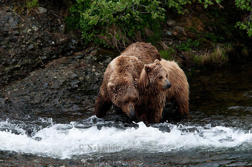 Mon bear is teaching how to fish salmon.