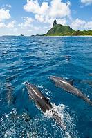 Spinner Dolphin, Stenella longirostris, Fernando de Noronha, Brazilian Coast, Atlantic Ocean, Brazil.