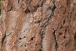 Texture of an old fir tree, Mt. Rainier National Forest.  Horizontal