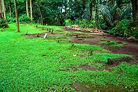 Bali, Gianyar, Ubud. Monkey Sanctuary. A Hindu graveyard close to Pura Prajapati.
