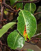 Leaf with sprinkles