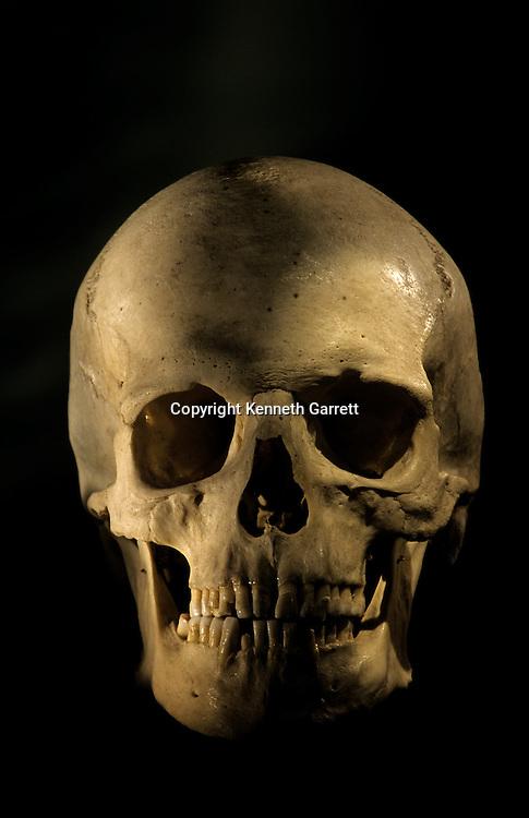Modern Human Skull, scientific study skeletonGeorge Washington University.