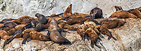 Glacier Bay Sea Lions