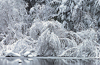 20021220 -- .Michael McCollum.Snow formations along the Merced River in spectacular Yosemite National Park.