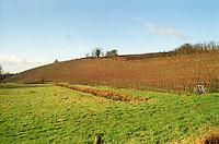 Vineyard. Bonnezeaux. Coteaux du Layon, Anjou, Loire, France