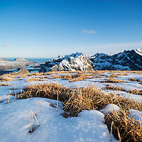 Grass emerges from melting spring snow on summit of Ryten, Moskenesoy, Lofoten Islands, Norway