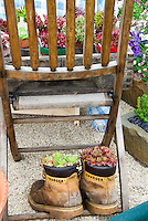 Sempervivum succulent plants in old shoes boots planter pot containers for a funny quirkly humorous garden scene, upcycling, with chair full of wooden crate and plants