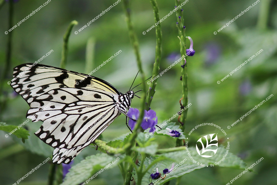 Beautiful black and white butterfly perched on a flower stem - Free Stock Photo.
