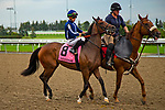 TORONT,CANADA-SEP 15: Abscond,ridden by Irad Ortiz jr, is post parading before the Natalma Stakes at Woodbine Race Track on September 15,2019 in Toronto,Ontario,Canada. Kaz Ishida/Eclipse Sportswire/CSM