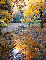 Starved Rock State Park, IL<br /> Fall reflections in the leaf covered stream in Kaskaskia Canyon