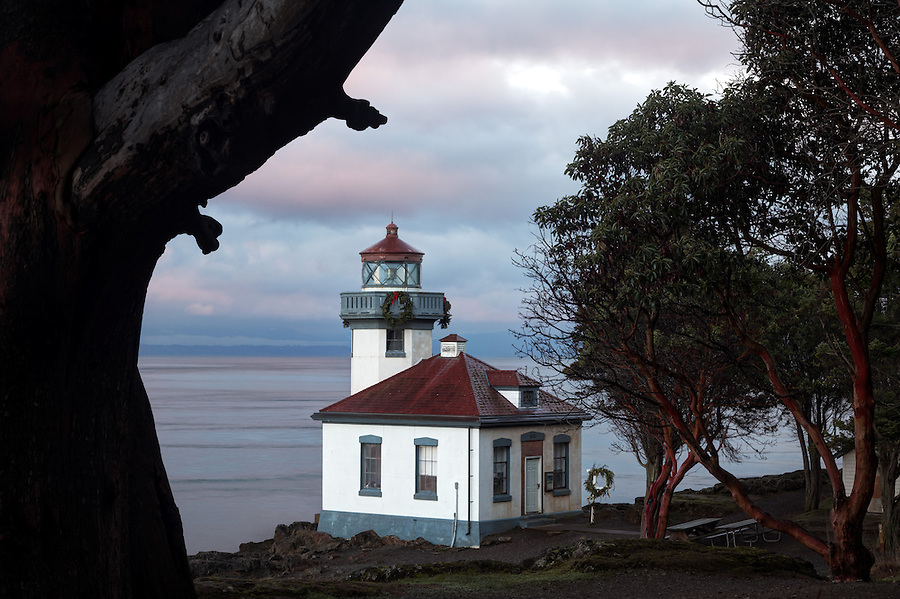 Lime Kiln Lighthouse framed by Pacific Madrone at dawn, Washington