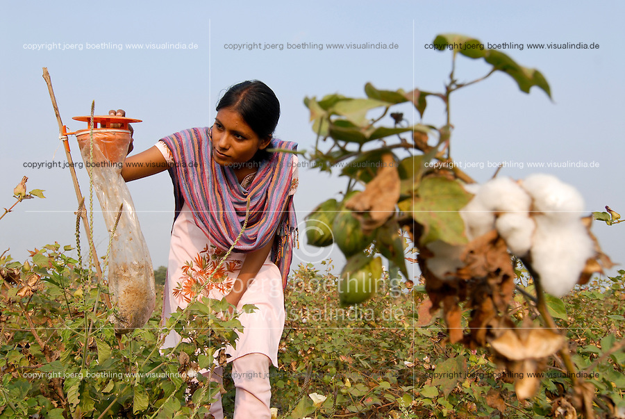 INDIA Madhya Pradesh , organic cotton project bioRe in Kasrawad  , woman check a feromon trap for biological pest control of the bollworm / INDIEN Madhya Pradesh , Mitarbeiterin der bioRe India begutachtet eine Feromonfalle zur biologischen Schaedlingsbekaempfung , Projekt fuer biodynamischen Anbau von Biobaumwolle in Kasrawad