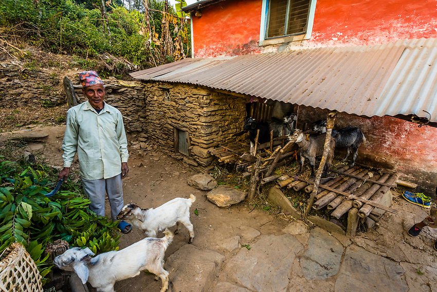Man with his goats outside a small house in the lower mountains of the Himalayas, near Pokhara, Nepal.