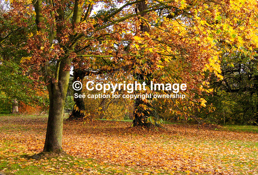 Barnett's Park, Belfast, N Ireland, auturn, fall, trees, leaves, colours,200711040006.<br />