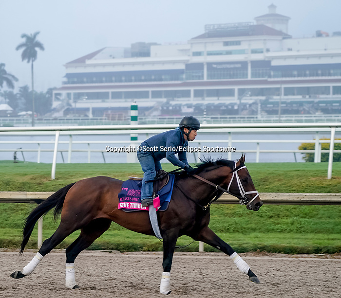 January 23, 2020: True Timber gallops as horses prepare for the Pegasus World Cup Invitational at Gulfstream Park Race Track in Hallandale Beach, Florida. Scott Serio/Eclipse Sportswire/CSM