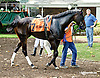 Angel of Mercy before The Beautiful Day Stakes at Delaware Park on 7/3/14