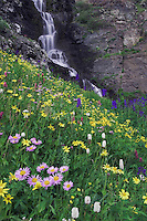 Waterfall and wildflowers in alpine meadow,Showy Daisy,Erigeron speciosus,Heartleaf Arnica,Tall Larkspur, Bistort,Ouray, San Juan Mountains, Rocky Mountains, Colorado, USA, July 2007