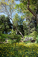 A spring day at the Huntington Library and Botanical Gardens in San Marino, California.