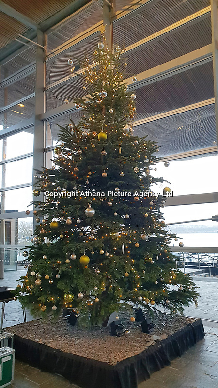 The Christmas Tree in the Senedd, Welsh Parliament in Cardiff Bay, Wales, UK. Tuesday 11 December 2018