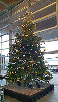 2018 12 11 Christmas tree in the Senedd, Cardiff Bay, UK