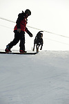 Crested Butte ski patrolman Shawn Williams snowboards with his chocolate avalanche rescue lab, Ziggy.