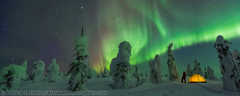 Man stands by yellow tent at a winter camp in the boreal forest, Interior, Alaska.