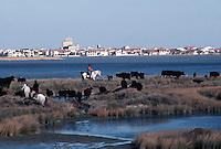 France/13/Bouches du Rhone/Camargue/Parc Naturel Régional de Camargue/Saintes Maries de La Mer: Dans une manade, gardian et un troupeau de taureaux