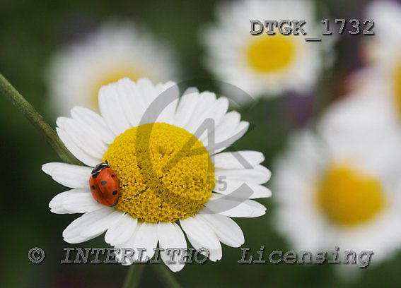 Gisela, FLOWERS, photos, DTGK1732,#f# Blumen, flores, retrato