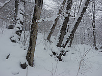 FOREST_LOCATION_90182