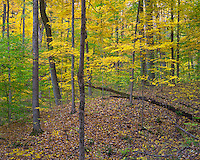 McCormick's Creek State Park, Indiana: Hardwood forest in autumn. This state park is the oldest in Indiana; established in 1916.